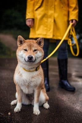 Woodsdog Über uns Mochi