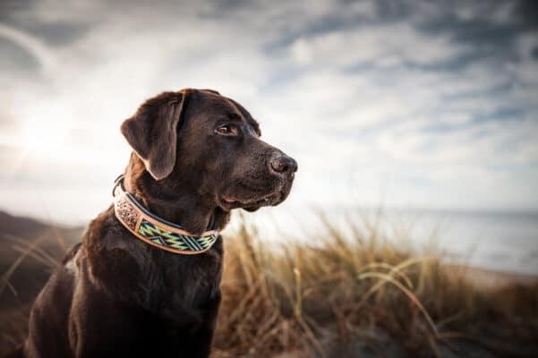 Woodsdog Landing Banner Collar Nala