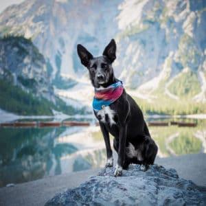 Woodsdog Size Guide Header