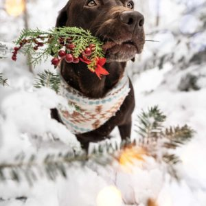 Woodsdog Bailey Zion Bandana