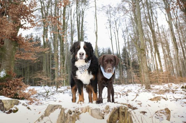 Woodsdog Finja und Billie Julier Bandana