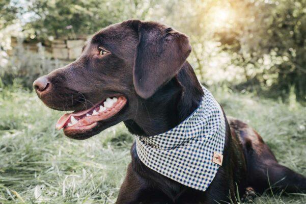Woodsdog Billie Bandana Fletschhorn