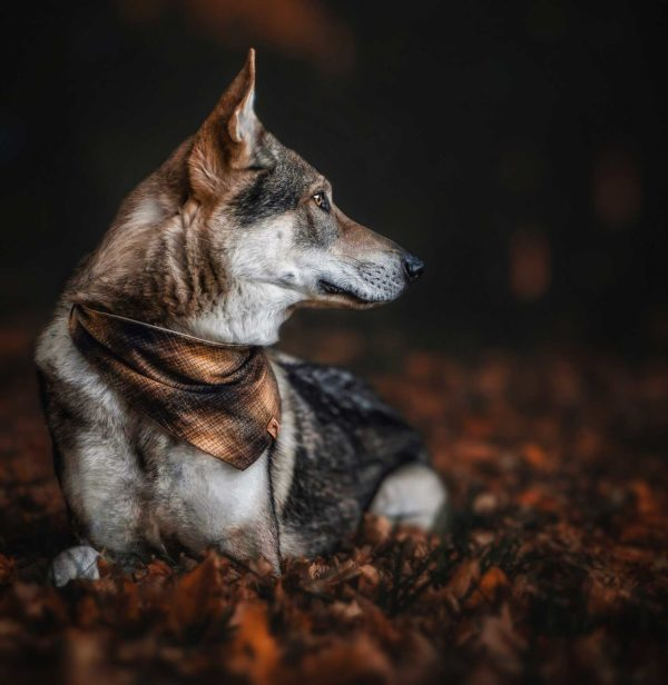 Woodsdog Demon Bandana Hungabee