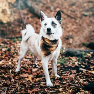Woodsdog Merlin Bandana Hungabee