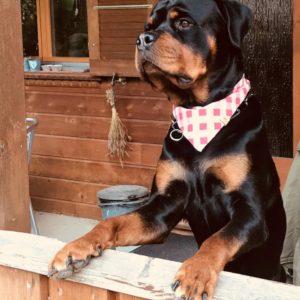 Woodsdog Rotti Bandana Simplon