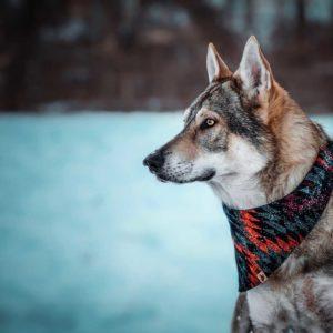 Woodsdog Wolfdog Bandana Bryce