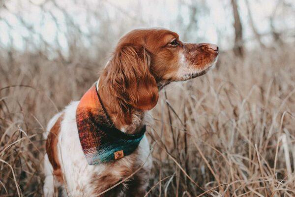 Woodsdog Berti Bandana Logan