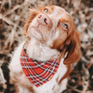Woodsdog Berti Bandana Waddington
