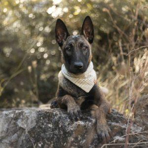 Woodsdog Oslow Bandana Weissmies