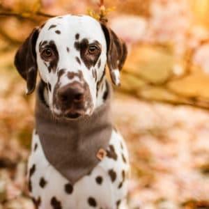 Woodsdog Sirius Bandana Payton