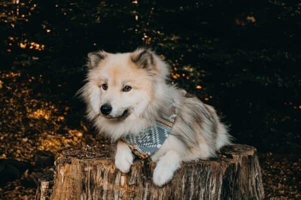 Woodsdog Timur Bandana Banff