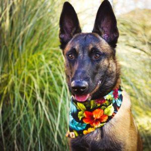 Woodsdog Usco Bandana Oahu