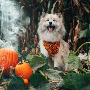 Woodsdog Timur Pumpkin Bandana