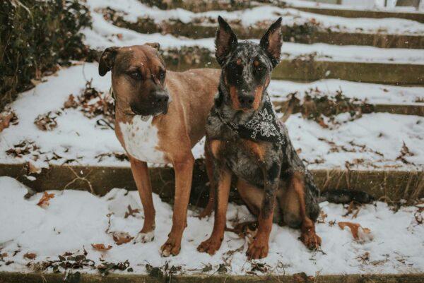 Woodsdog Hund Bandana MonteLeone