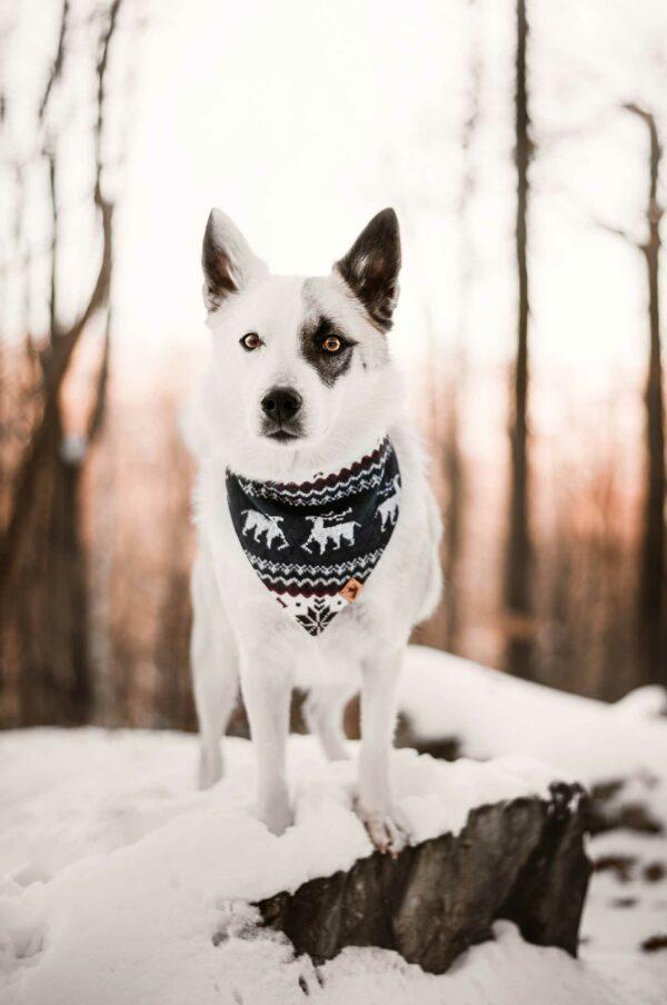 Woodsdog Merlin Bandana Helsenhorn