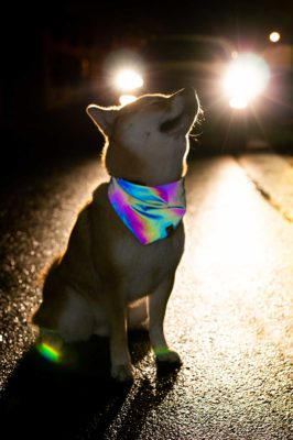 Woodsdog Mochi Bandana Light Up
