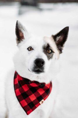 Woodsdog Merlin Bandana Redwood