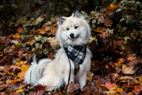 Woodsdog Timur Bandana Robson
