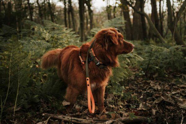 Woodsdog Jack Durango Landing