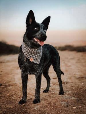 Woodsdog Briar Nordic Bandana