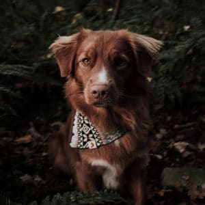 Woodsdog Jack Saariselkä Bandana