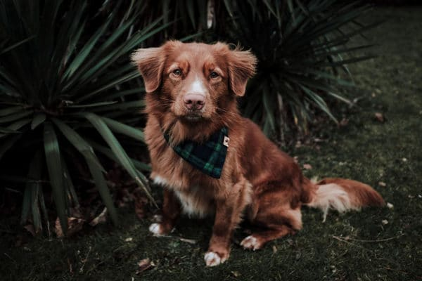 Woodsdog Jack Yukon Bandana