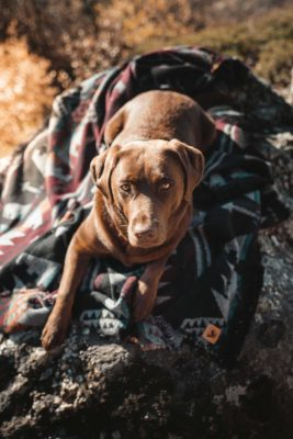 Woodsdog Decke Big Sitka