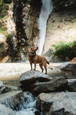 Woodsdog Halsband Sommer Edition