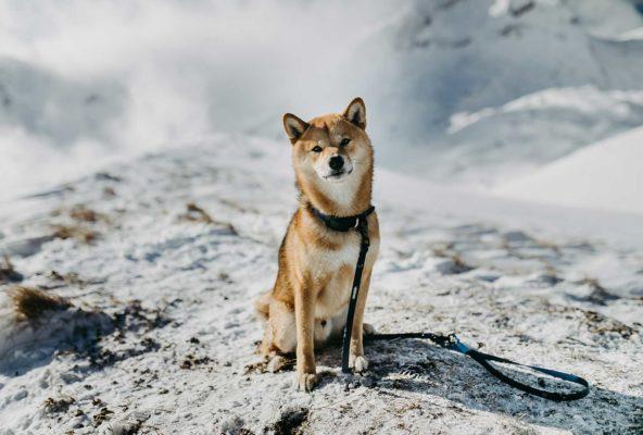 Woodsdog Sirius Biothane Halsband und Leine