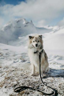 Woodsdog Timur Biothane Halsband und Leine
