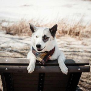 Woodsdog Merlin Yellowstone Bandana