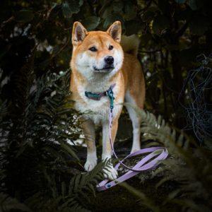 Woodsdog Durango Halsband Forever Summer Edition